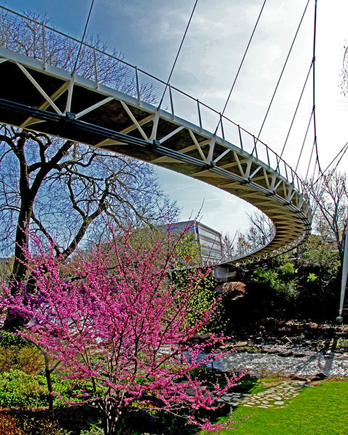 Liberty Bridge with flowering tree underneath